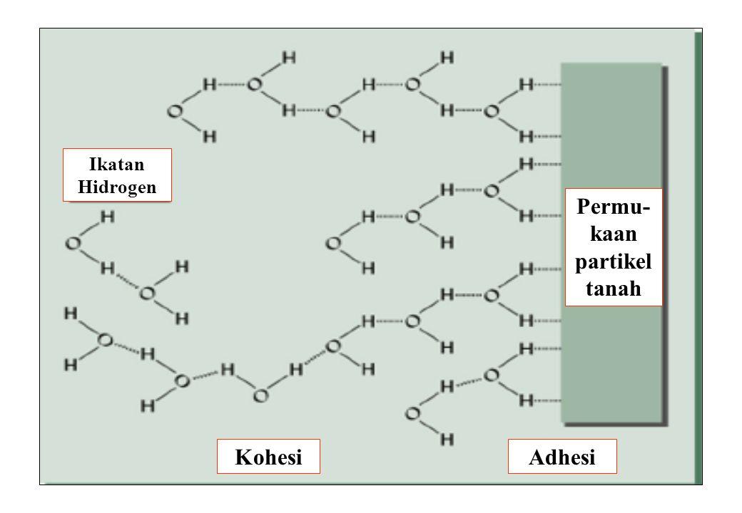 20 Ikatan Hidrogen KohesiAdhesi Permu- kaan partikel tanah