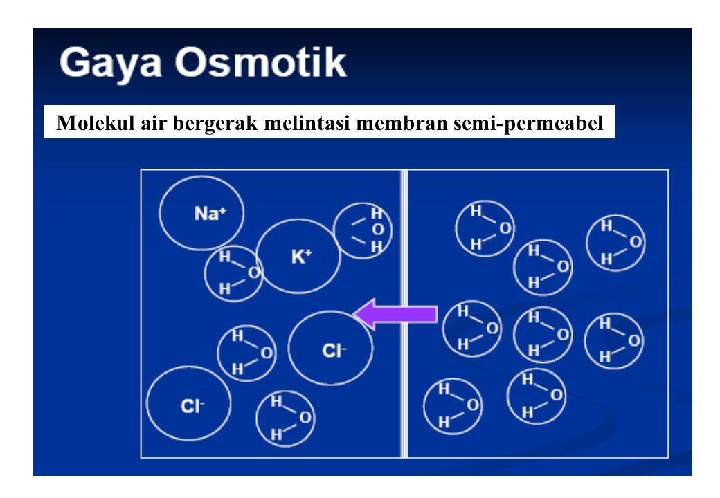 32 Molekul air bergerak melintasi membran semi-permeabel