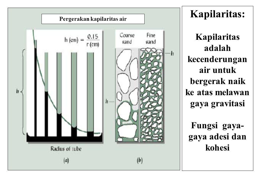 Kapilaritas: Kapilaritas adalah kecenderungan air untuk bergerak naik ke atas melawan gaya gravitasi Fungsi gaya- gaya adesi dan kohesi Pergerakan kapilaritas air