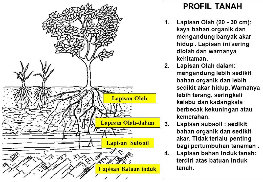 PROFIL TANAH 1.Lapisan Olah (20 - 30 cm): kaya bahan organik dan mengandung banyak akar hidup.