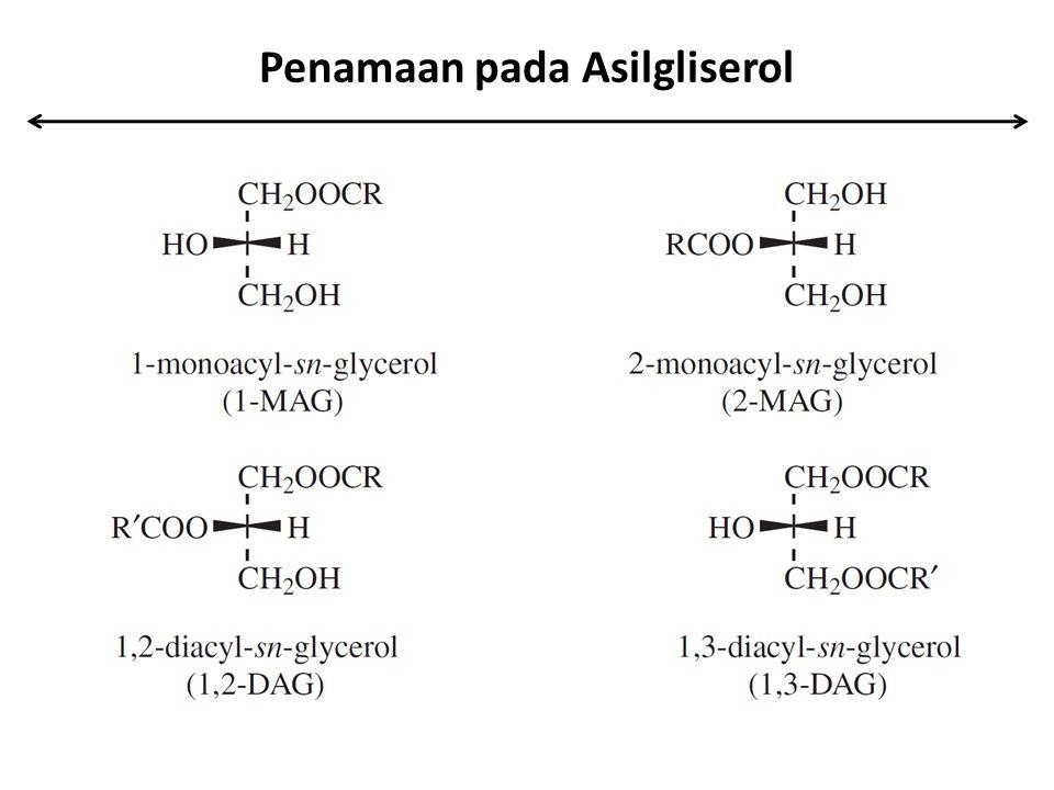 Penamaan pada Asilgliserol