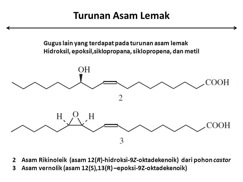 Turunan Asam Lemak 2Asam Rikinoleik (asam 12(R)-hidroksi-9Z-oktadekenoik) dari pohon castor 3Asam vernolik (asam 12(S),13(R) –epoksi-9Z-oktadekenoik)