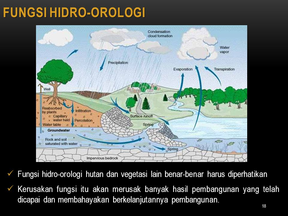 18 FUNGSI HIDRO-OROLOGI Fungsi hidro-orologi hutan dan vegetasi lain benar-benar harus diperhatikan Kerusakan fungsi itu akan merusak banyak hasil pem