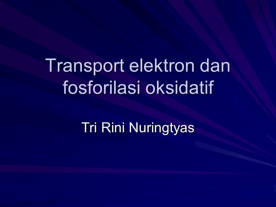 Transport elektron dan fosforilasi oksidatif Tri Rini Nuringtyas