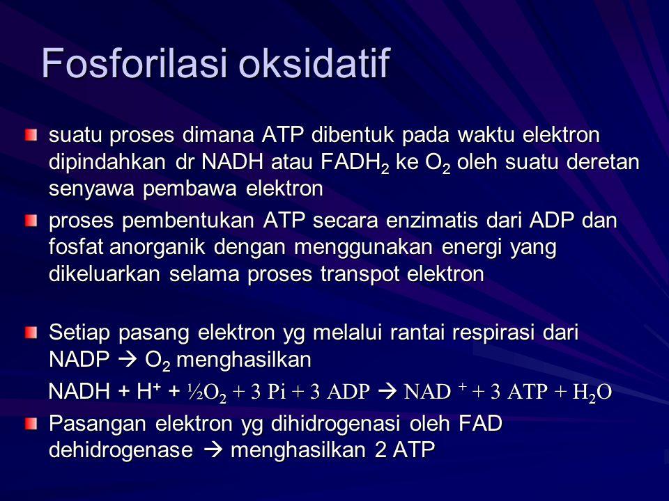 Fosforilasi oksidatif suatu proses dimana ATP dibentuk pada waktu elektron dipindahkan dr NADH atau FADH 2 ke O 2 oleh suatu deretan senyawa pembawa e