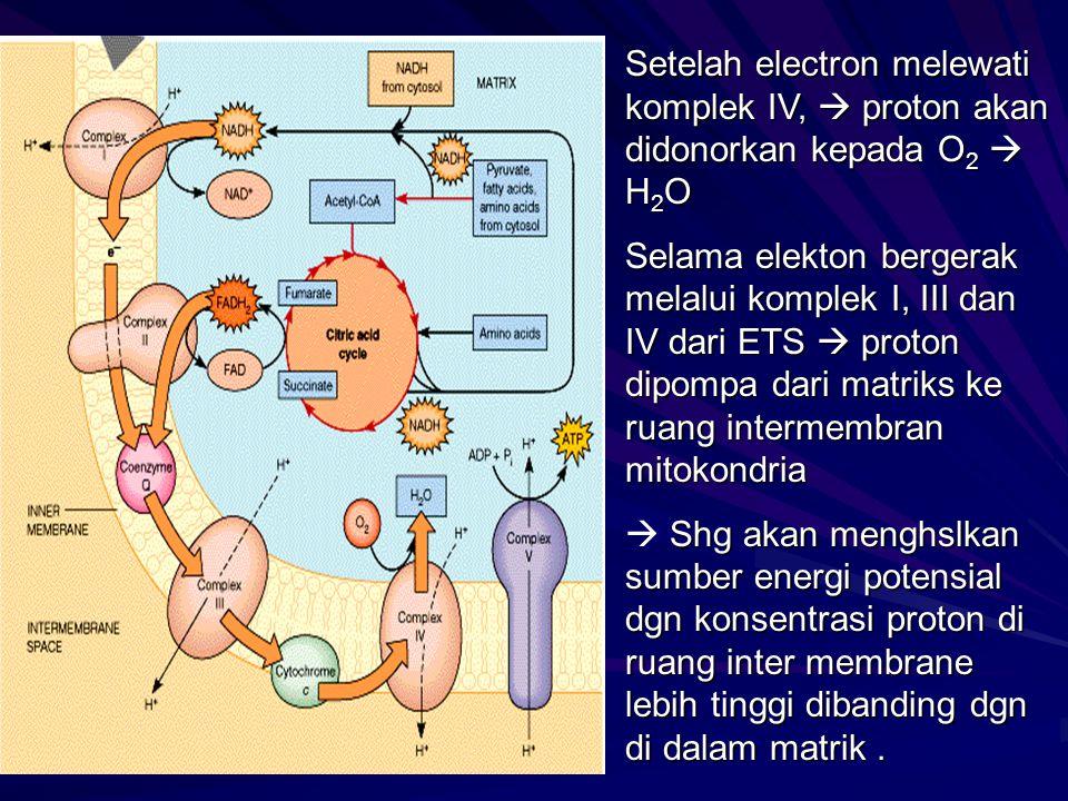 Setelah electron melewati komplek IV,  proton akan didonorkan kepada O 2  H 2 O Selama elekton bergerak melalui komplek I, III dan IV dari ETS  pro