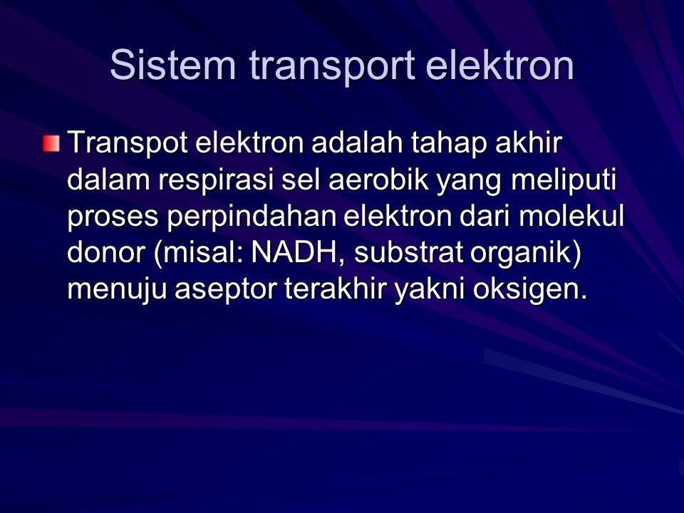Sistem transport elektron Transpot elektron adalah tahap akhir dalam respirasi sel aerobik yang meliputi proses perpindahan elektron dari molekul dono