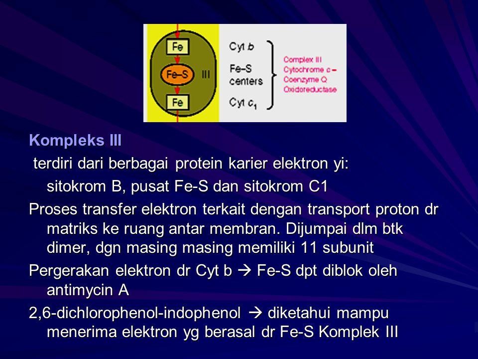 Kompleks III terdiri dari berbagai protein karier elektron yi: terdiri dari berbagai protein karier elektron yi: sitokrom B, pusat Fe-S dan sitokrom C