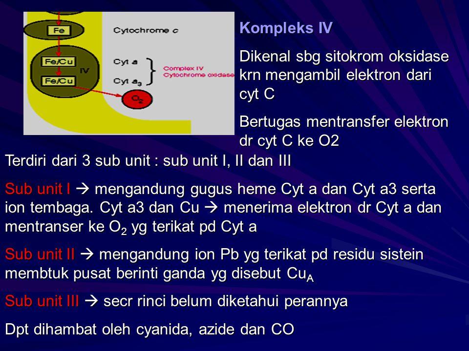 Kompleks IV Dikenal sbg sitokrom oksidase krn mengambil elektron dari cyt C Bertugas mentransfer elektron dr cyt C ke O2 Terdiri dari 3 sub unit : sub