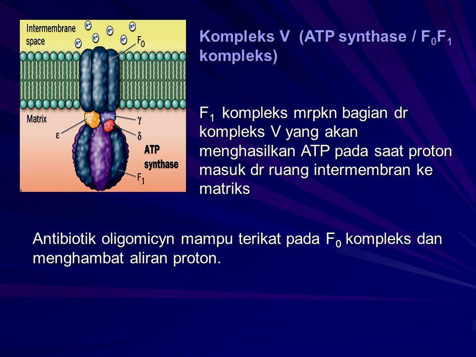 Kompleks V (ATP synthase / F 0 F 1 kompleks) F 1 kompleks mrpkn bagian dr kompleks V yang akan menghasilkan ATP pada saat proton masuk dr ruang interm