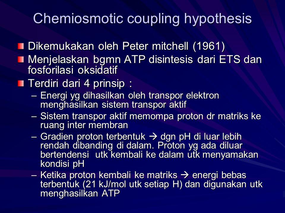 Chemiosmotic coupling hypothesis Dikemukakan oleh Peter mitchell (1961) Menjelaskan bgmn ATP disintesis dari ETS dan fosforilasi oksidatif Terdiri dar