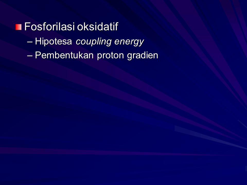 Fosforilasi oksidatif –Hipotesa coupling energy –Pembentukan proton gradien