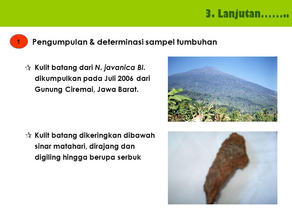 3. Lanjutan…….. 1 Pengumpulan & determinasi sampel tumbuhan Kulit batang dari N. javanica Bl. dikumpulkan pada Juli 2006 dari Gunung Ciremai, Jawa Bar