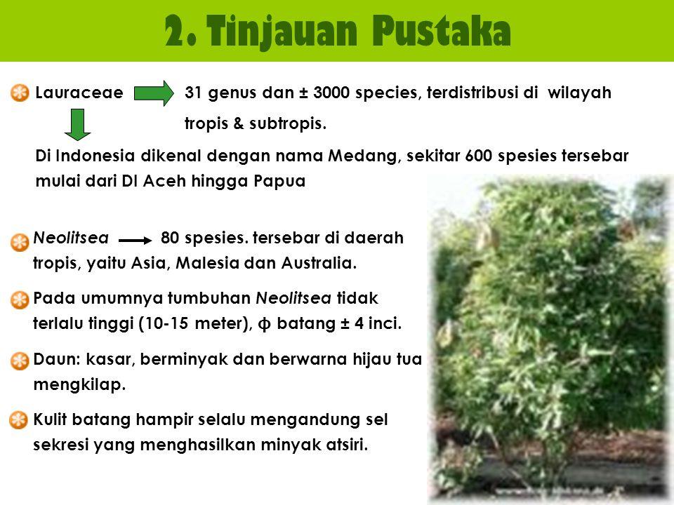 2. Tinjauan Pustaka Lauraceae 31 genus dan ± 3000 species, terdistribusi di wilayah tropis & subtropis. Di Indonesia dikenal dengan nama Medang, sekit