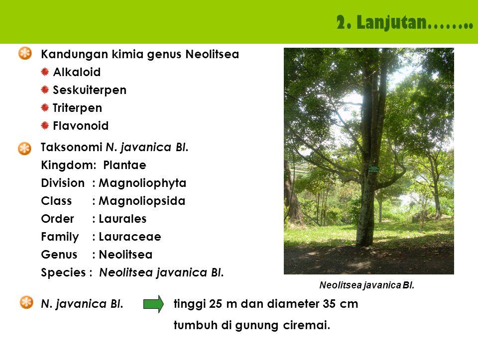 2. Lanjutan…….. N. javanica Bl. tinggi 25 m dan diameter 35 cm tumbuh di gunung ciremai. Taksonomi N. javanica Bl. Kingdom: Plantae Division : Magnoli