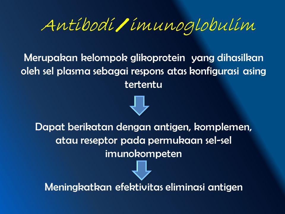 Merupakan kelompok glikoprotein yang dihasilkan oleh sel plasma sebagai respons atas konfigurasi asing tertentu Dapat berikatan dengan antigen, komple