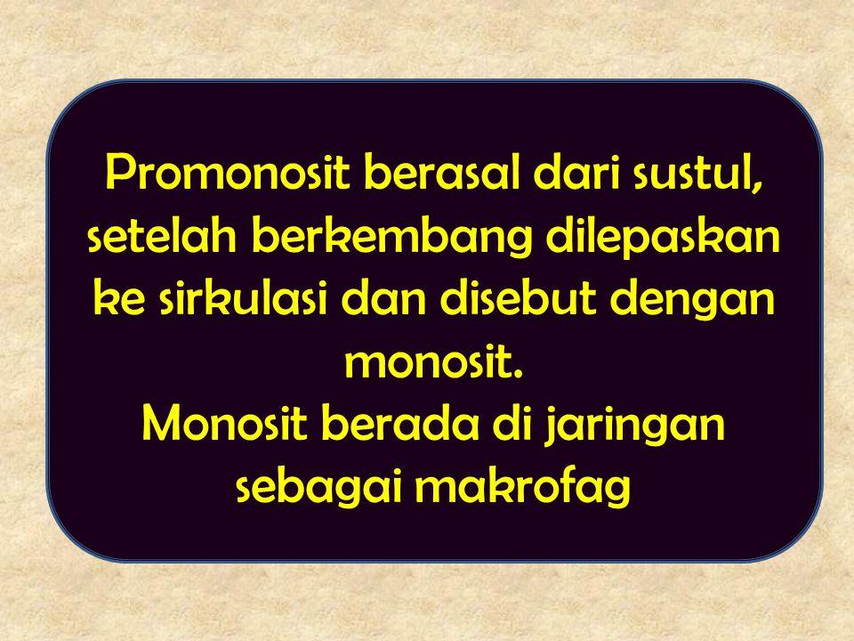 Promonosit berasal dari sustul, setelah berkembang dilepaskan ke sirkulasi dan disebut dengan monosit. Monosit berada di jaringan sebagai makrofag