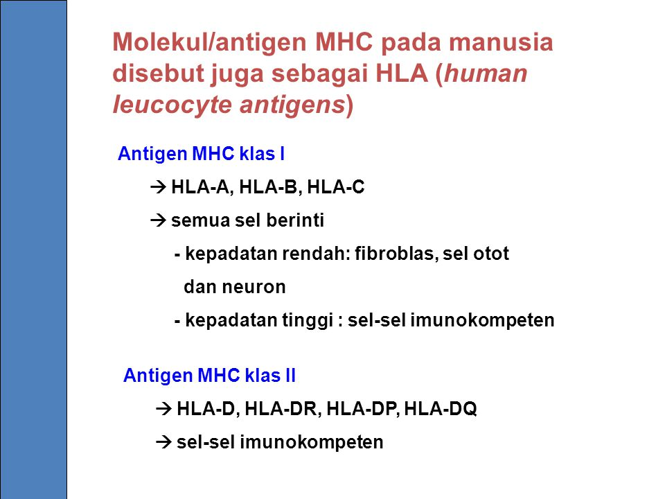 Molekul/antigen MHC pada manusia disebut juga sebagai HLA (human leucocyte antigens) Antigen MHC klas I  HLA-A, HLA-B, HLA-C  semua sel berinti - ke