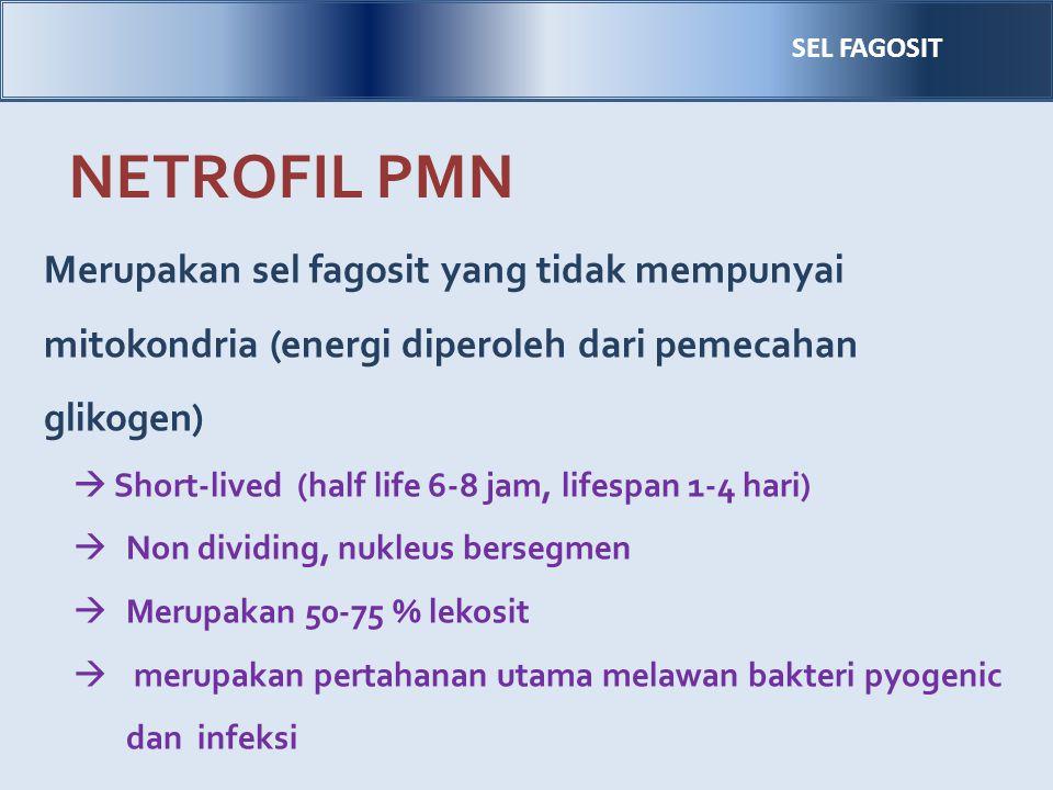 NETROFIL PMN Merupakan sel fagosit yang tidak mempunyai mitokondria (energi diperoleh dari pemecahan glikogen)  Short-lived (half life 6-8 jam, lifes