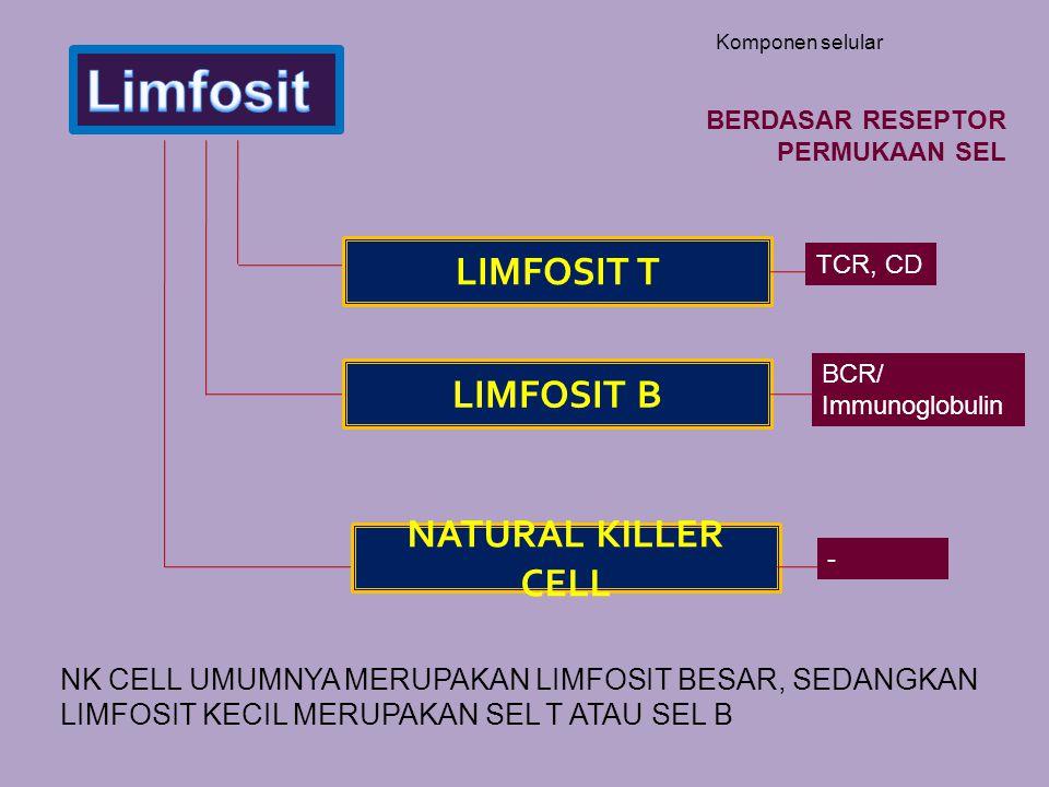 Komponen selular LIMFOSIT T LIMFOSIT B NATURAL KILLER CELL NK CELL UMUMNYA MERUPAKAN LIMFOSIT BESAR, SEDANGKAN LIMFOSIT KECIL MERUPAKAN SEL T ATAU SEL