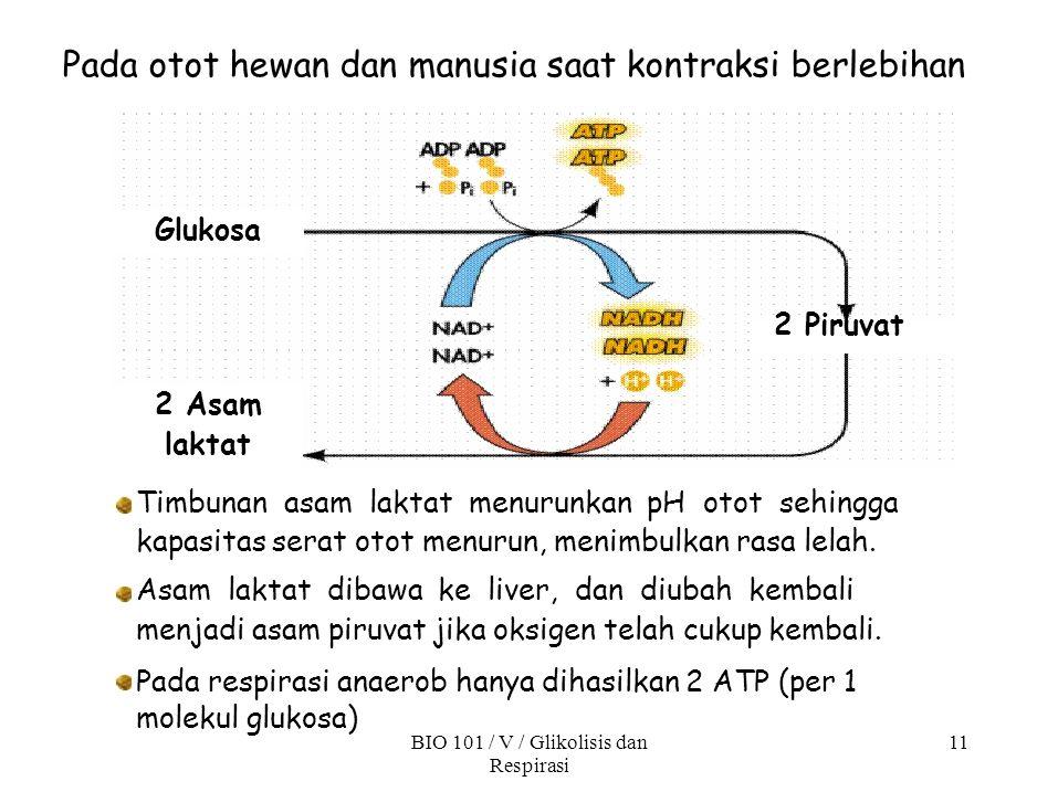11 Pada respirasi anaerob hanya dihasilkan 2 ATP (per 1 molekul glukosa) BIO 101 / V / Glikolisis dan Respirasi Pada otot hewan dan manusia saat kontr