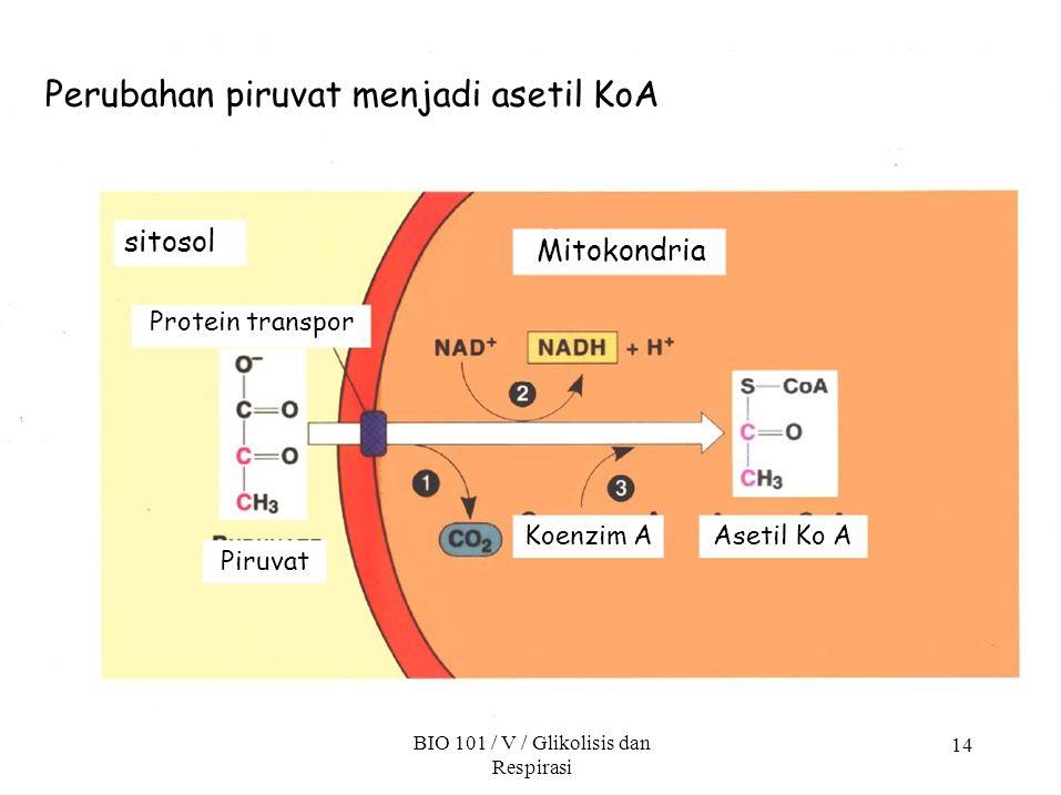 14 Perubahan piruvat menjadi asetil KoA sitosol Protein transpor Mitokondria Piruvat Koenzim A BIO 101 / V / Glikolisis dan Respirasi Asetil Ko A