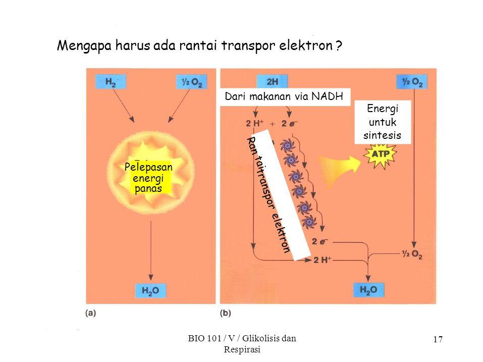 spor tran tai Ran tron elek 17 Mengapa harus ada rantai transpor elektron ? Pelepasan energi panas Energi untuk sintesis Dari makanan via NADH BIO 101