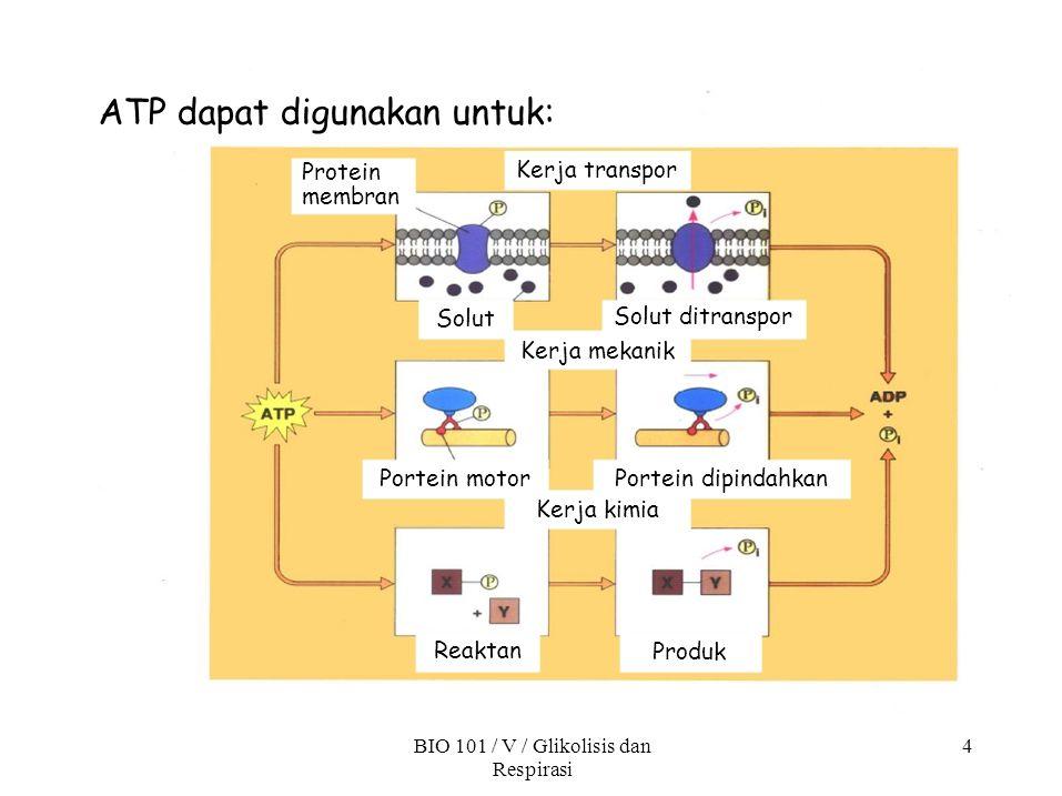BIO 101 / V / Glikolisis dan Respirasi 4 ATP dapat digunakan untuk: Protein membran Solut Kerja transpor Solut ditranspor Kerja mekanik Portein motor