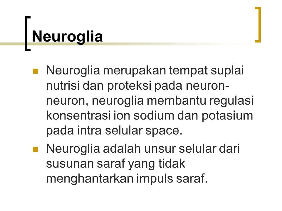 Neuroglia Neuroglia merupakan tempat suplai nutrisi dan proteksi pada neuron- neuron, neuroglia membantu regulasi konsentrasi ion sodium dan potasium pada intra selular space.