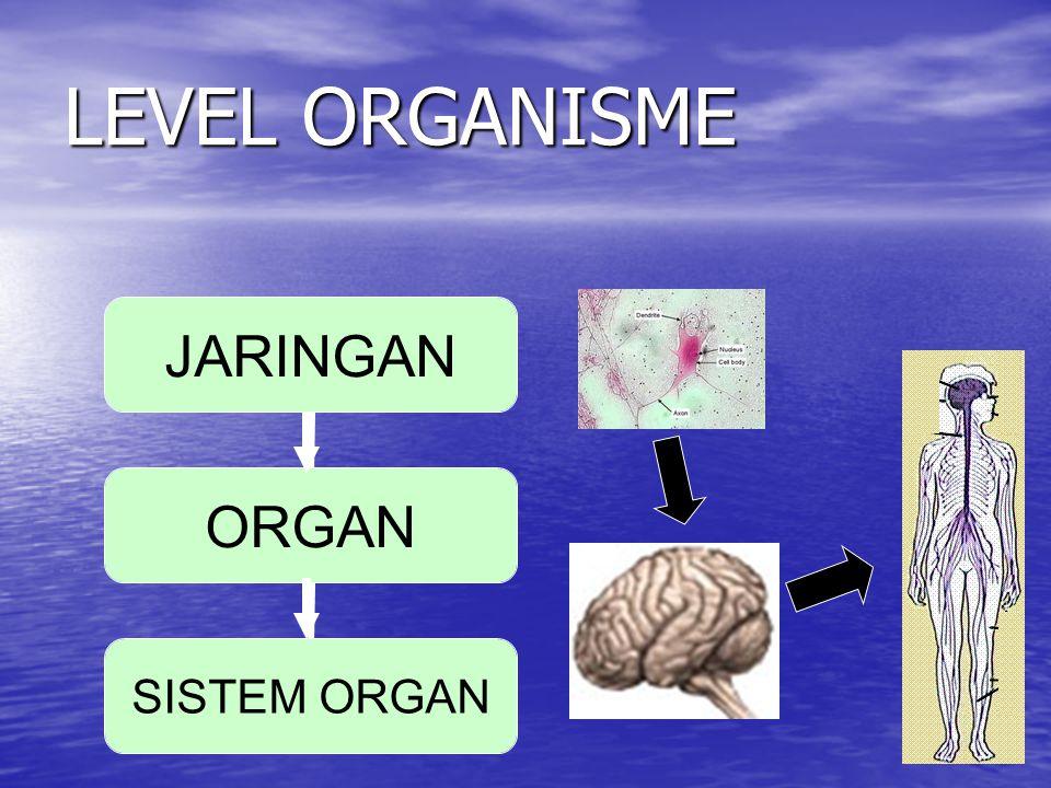 LEVEL ORGANISME JARINGAN ORGAN SISTEM ORGAN