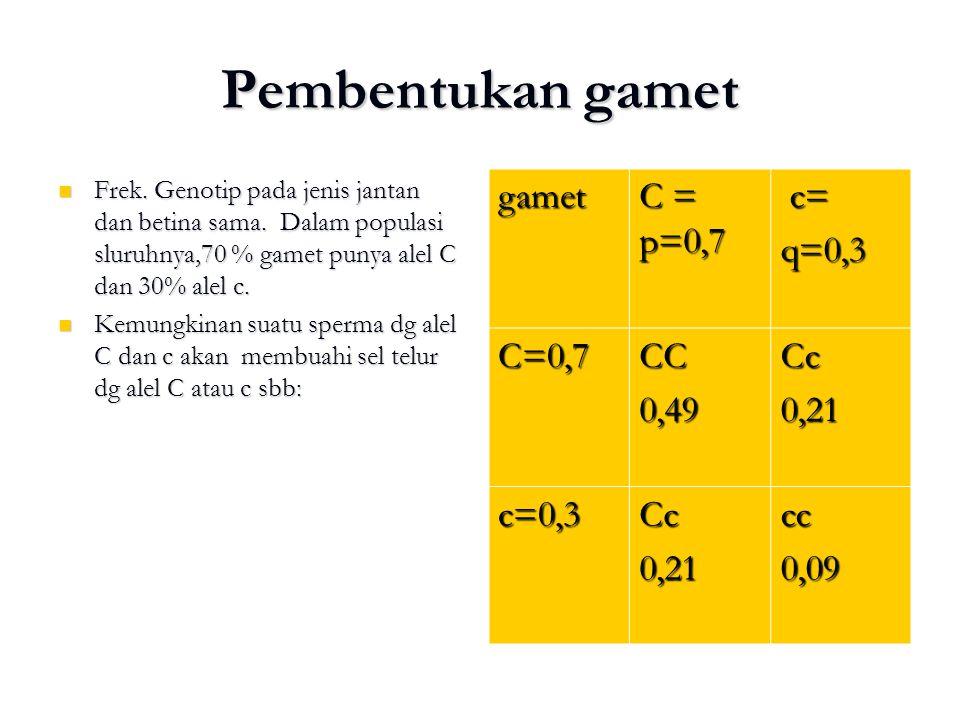 Pembentukan gamet Frek. Genotip pada jenis jantan dan betina sama. Dalam populasi sluruhnya,70 % gamet punya alel C dan 30% alel c. Frek. Genotip pada