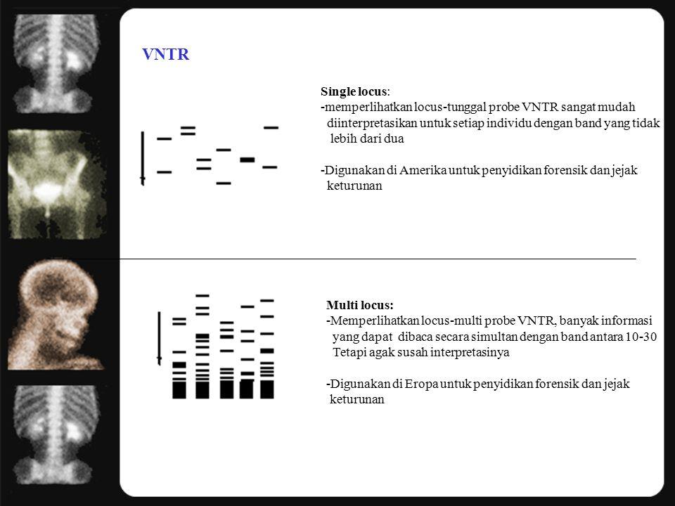 VNTR Single locus: -memperlihatkan locus-tunggal probe VNTR sangat mudah diinterpretasikan untuk setiap individu dengan band yang tidak lebih dari dua -Digunakan di Amerika untuk penyidikan forensik dan jejak keturunan Multi locus: -Memperlihatkan locus-multi probe VNTR, banyak informasi yang dapat dibaca secara simultan dengan band antara 10-30 Tetapi agak susah interpretasinya -Digunakan di Eropa untuk penyidikan forensik dan jejak keturunan