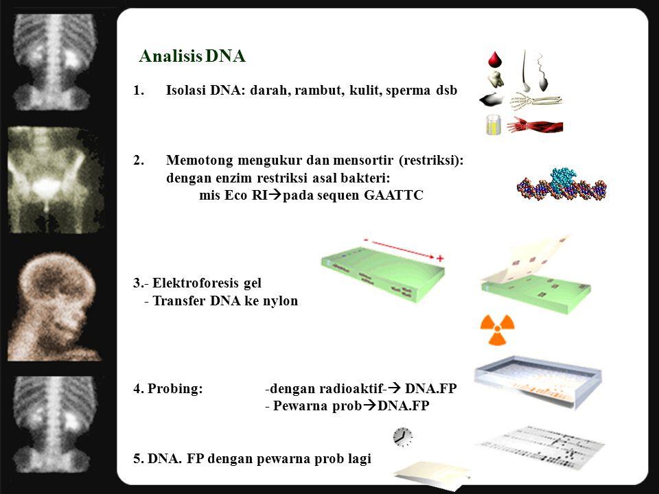 Analisis DNA 1.Isolasi DNA: darah, rambut, kulit, sperma dsb 2.Memotong mengukur dan mensortir (restriksi): dengan enzim restriksi asal bakteri: mis Eco RI  pada sequen GAATTC 3.- Elektroforesis gel - Transfer DNA ke nylon 4.