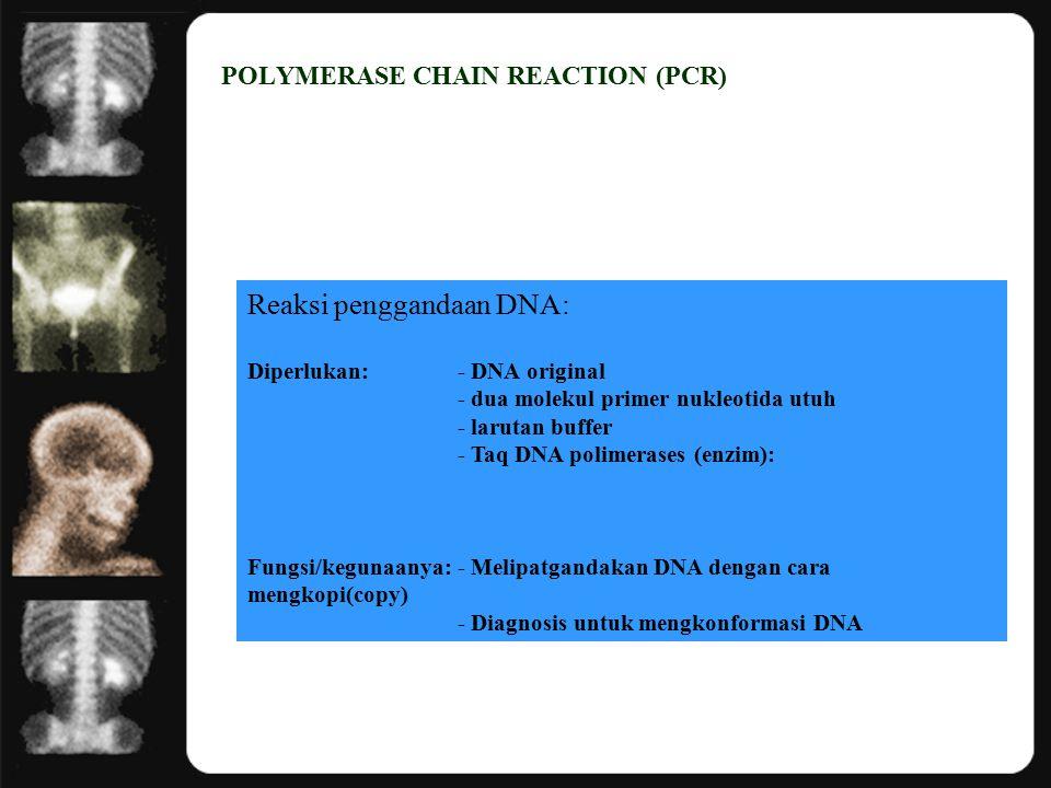 POLYMERASE CHAIN REACTION (PCR) Reaksi penggandaan DNA: Diperlukan:- DNA original - dua molekul primer nukleotida utuh - larutan buffer - Taq DNA polimerases (enzim): Fungsi/kegunaanya:- Melipatgandakan DNA dengan cara mengkopi(copy) - Diagnosis untuk mengkonformasi DNA