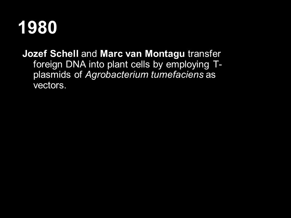 1980 Jozef Schell and Marc van Montagu transfer foreign DNA into plant cells by employing T- plasmids of Agrobacterium tumefaciens as vectors.