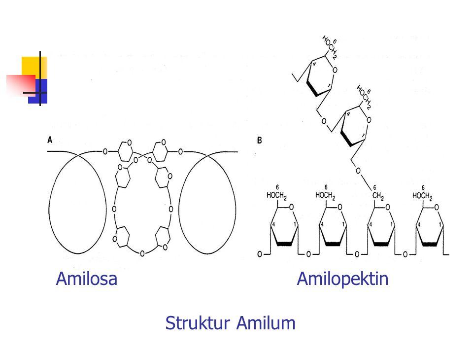 Amilosa Amilopektin Struktur Amilum