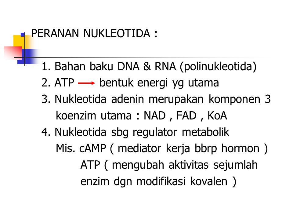PERANAN NUKLEOTIDA : 1. Bahan baku DNA & RNA (polinukleotida) 2. ATP bentuk energi yg utama 3. Nukleotida adenin merupakan komponen 3 koenzim utama :
