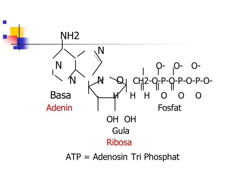 NH2 N N O- O- O- N N O CH2-O-P-O-P-O-P-O- Basa H H H O O O Adenin Fosfat OH OH Gula Ribosa ATP = Adenosin Tri Phosphat