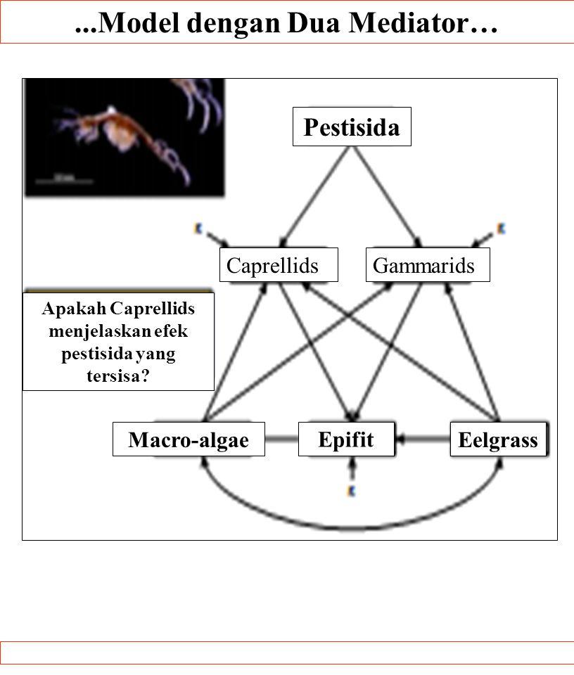 ...Model dengan Dua Mediator….SUMBER:. Pestisida CaprellidsGammarids Macro-algae Epifit Eelgrass Apakah Caprellids menjelaskan efek pestisida yang ter