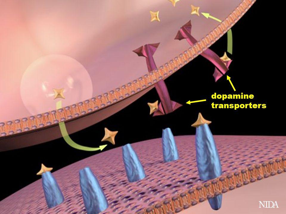 dopamine transporters