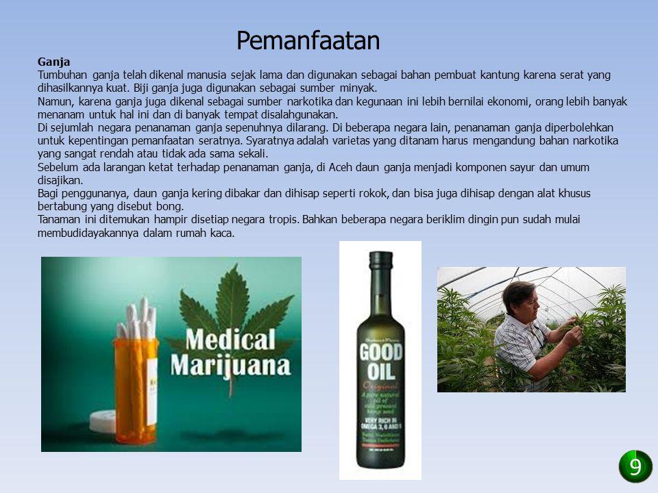 Pemanfaatan Morfin Morfin adalah alkaloid analgesik yang sangat kuat dan merupakan agen aktif utama yang ditemukan pada opium.