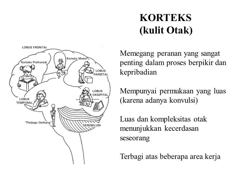 KORTEKS (kulit Otak) Memegang peranan yang sangat penting dalam proses berpikir dan kepribadian Mempunyai permukaan yang luas (karena adanya konvulsi) Luas dan kompleksitas otak menunjukkan kecerdasan seseorang Terbagi atas beberapa area kerja