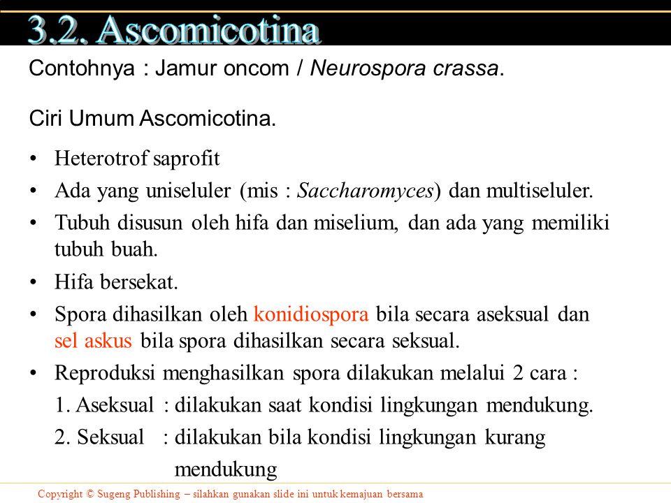 Copyright © Sugeng Publishing – silahkan gunakan slide ini untuk kemajuan bersama Contohnya : Jamur oncom / Neurospora crassa. Ciri Umum Ascomicotina.