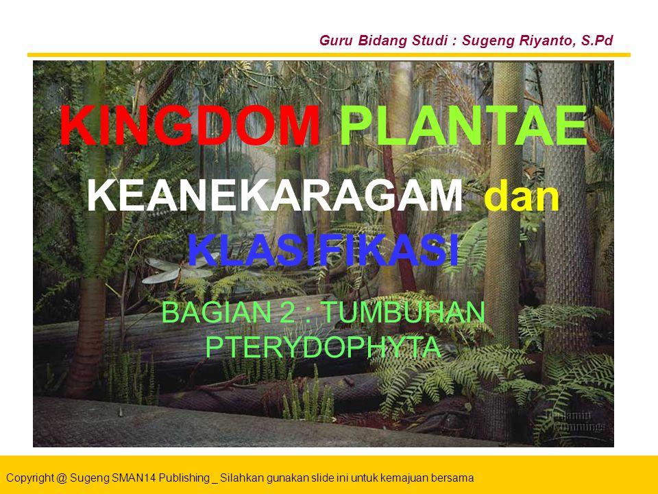 Copyright @ Sugeng SMAN14 Publishing _ Silahkan gunakan slide ini untuk kemajuan bersama KINGDOM PLANTAE Bahan Ajar PowerPoint ® Untuk : Siswa SMA Kelas X Guru Bidang Studi : Sugeng Riyanto, S.Pd BAGIAN 1 : TUMBUHAN BRYOPHYTA KINGDOM PLANTAE KEANEKARAGAM dan KLASIFIKASI BAGIAN 2 : TUMBUHAN PTERYDOPHYTA