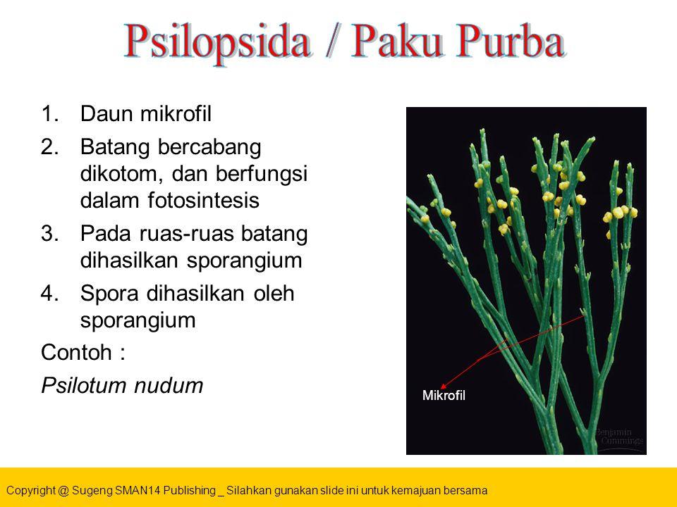 1.Daun mikrofil 2.Batang bercabang dikotom, dan berfungsi dalam fotosintesis 3.Pada ruas-ruas batang dihasilkan sporangium 4.Spora dihasilkan oleh sporangium Contoh : Psilotum nudum Mikrofil