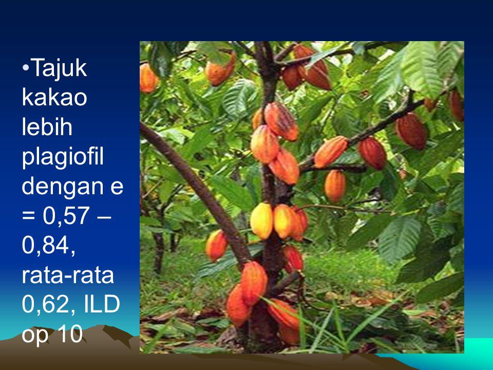 Tajuk kakao lebih plagiofil dengan e = 0,57 – 0,84, rata-rata 0,62, ILD op 10