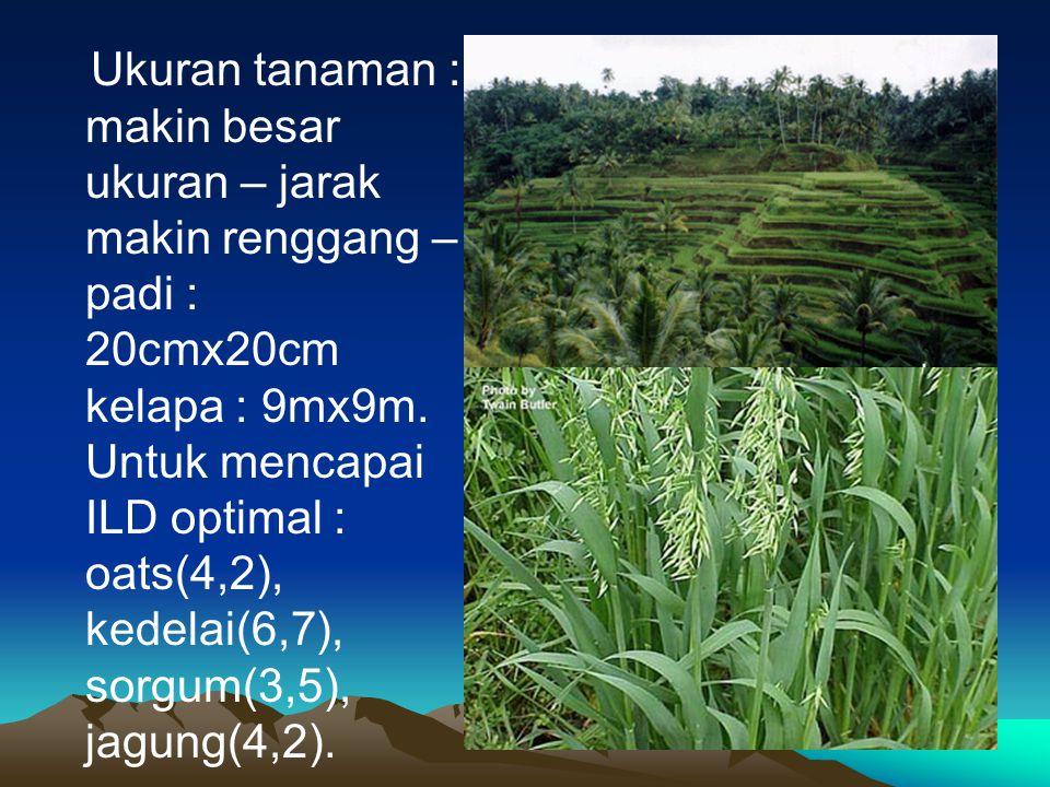 Ukuran tanaman : makin besar ukuran – jarak makin renggang – padi : 20cmx20cm kelapa : 9mx9m. Untuk mencapai ILD optimal : oats(4,2), kedelai(6,7), so