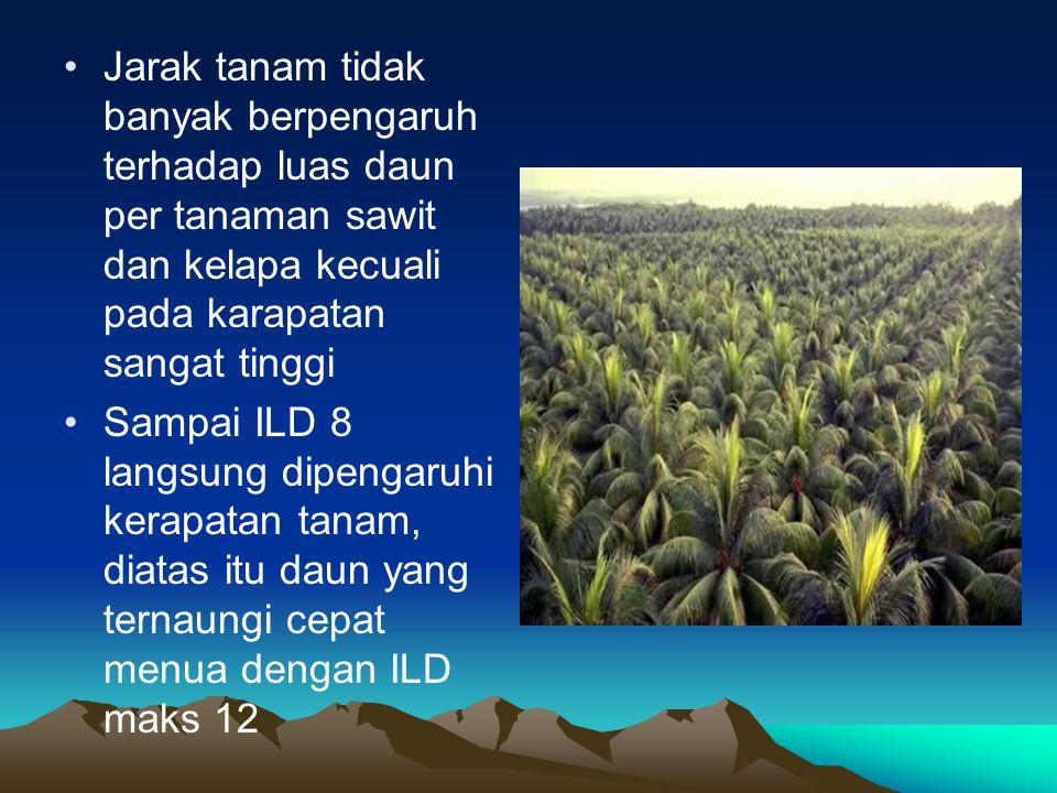 Jarak tanam tidak banyak berpengaruh terhadap luas daun per tanaman sawit dan kelapa kecuali pada karapatan sangat tinggi Sampai ILD 8 langsung dipeng
