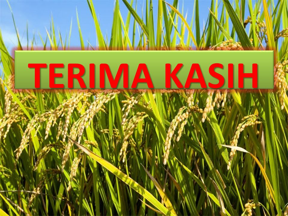 Pengendalian Hama terhadap tanaman Padi Penanganan terhadap hama yang menyerang tanaman budidaya dapat diatasi dengan penggunaan pestisida dan dengan teknik tradisional.