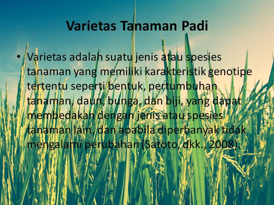 Sistem Tanam Intensifikasi Padi Rendahnya produktivitas padi yang paling dominan disebabkan oleh rendahnya pengisian biji atau masih tingginya persentase bulir steril.